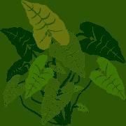 Rare plants of Sweden