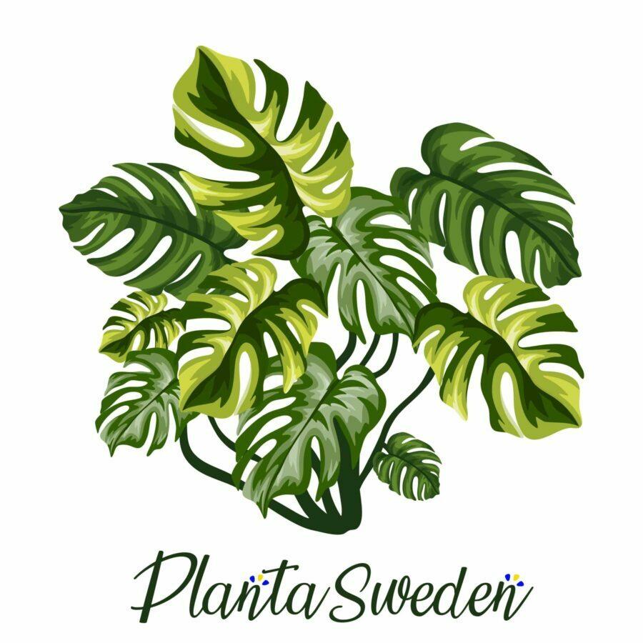 Plantasweden